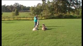 Teresa And Charm Obedience Training Shay And Sonoma Helping 08 13 09