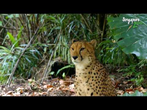 Singapore Zoo: World's Best Rainforest Zoo