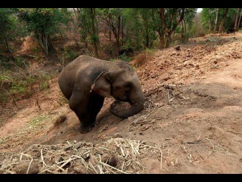 تايلاند.. انهيار السياحة ومجاعة للأفيال بسبب أزمة كورونا  - نشر قبل 1 ساعة