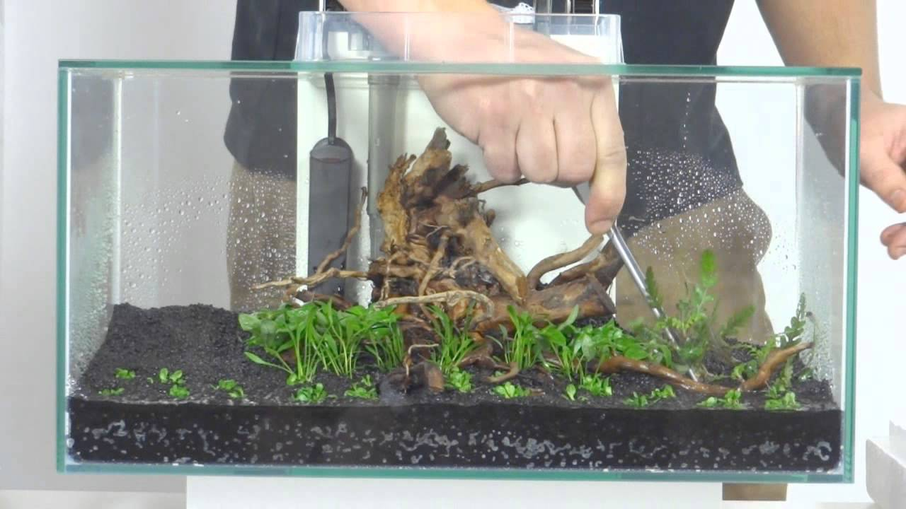 aquascaping: fluval edge, klein - youtube