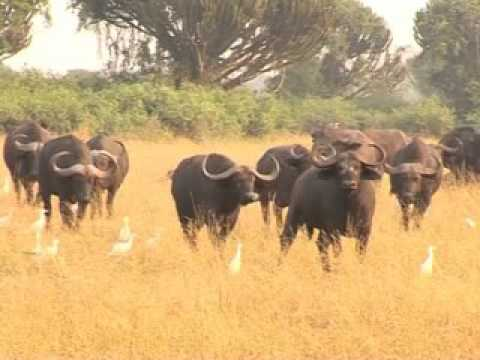 Documentary on Uganda : Gifted by Nature.