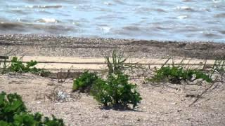 Должанская 2015 пляж на море(В прошлом году здесь был отличный кемпинг и пляж. Сейчас все по другому... Больше свежих новостей об отдыхе..., 2015-05-10T17:26:36.000Z)