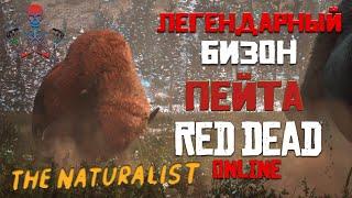 Read Dead Online (RDR Online) - Легендарные животные / Бизон Пейта / Усыпить и Взять образец