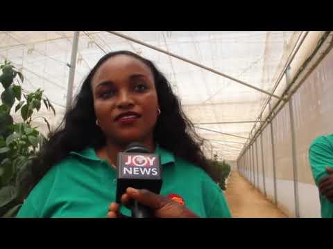 Kenyan air hostess takes to farming in Ghana