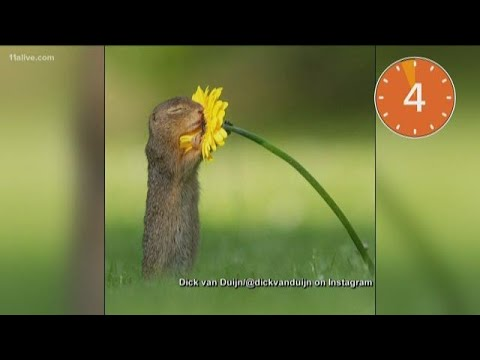 Dan Blackman - Cute Squirrel stops to smell a flower
