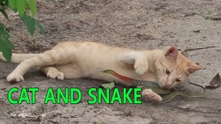 Funny cat and snake videos