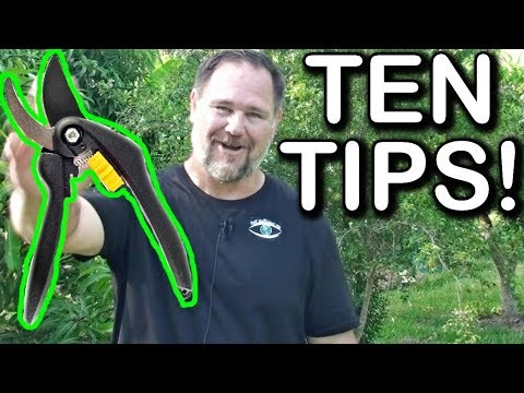 10 Tips How to Prune a Ton of Fruit Trees