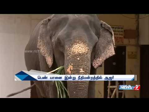 Suma, the rescued elephant to be handed over to Vandalur zoo | News7 Tamil
