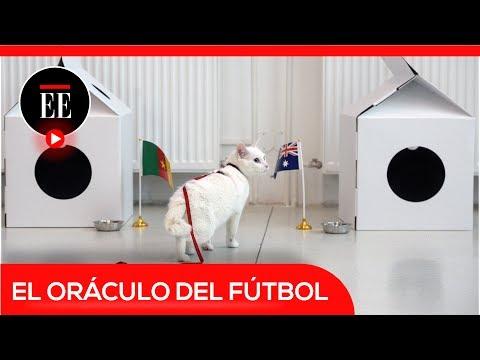 El gato Aquiles, el nuevo oráculo del fútbol   El Espectador