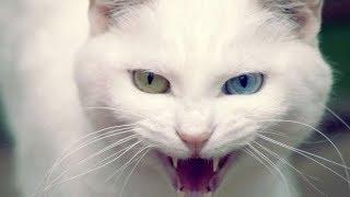 Смешное Видео про Животных