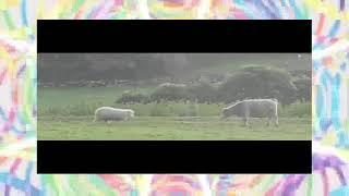 動物の面白動画を見つけました! 引用元https://youtu.be/mMPx8NF1kcI.