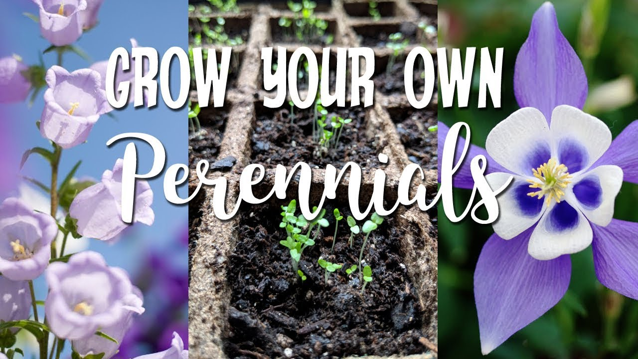 Walmart Spring Seed Haulgrow Your Own Perennials From Seeds