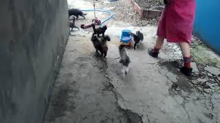 Кормление бездомных котов