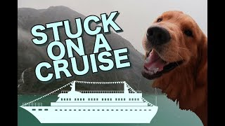 CRUISING WITH A SERVICE DOG | Travel Vlog