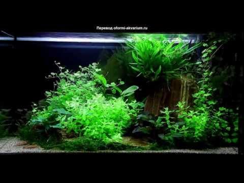 Оформление четырех аквариумов - панорама