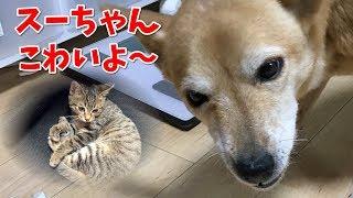 子猫の「ぽんぷくん」の生まれた場所。相模原で犬3匹と一緒に暮らすとは思わなかったよ~ 【関連動画】 かわいい子犬を拾ってきた俺。犬嫌い...