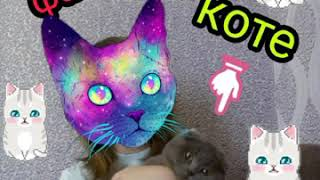 10 фактов о моём коте / он что то скрывает …? Сколько моему коту лет ( месяцев) когда он родился ?💖