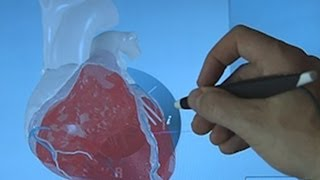 Amazing 3D simulation of human heart could change medical care