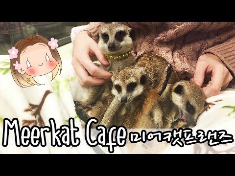 MEERKAT CAFE  미어캣프랜즈 [A DAY IN SEOUL #3]