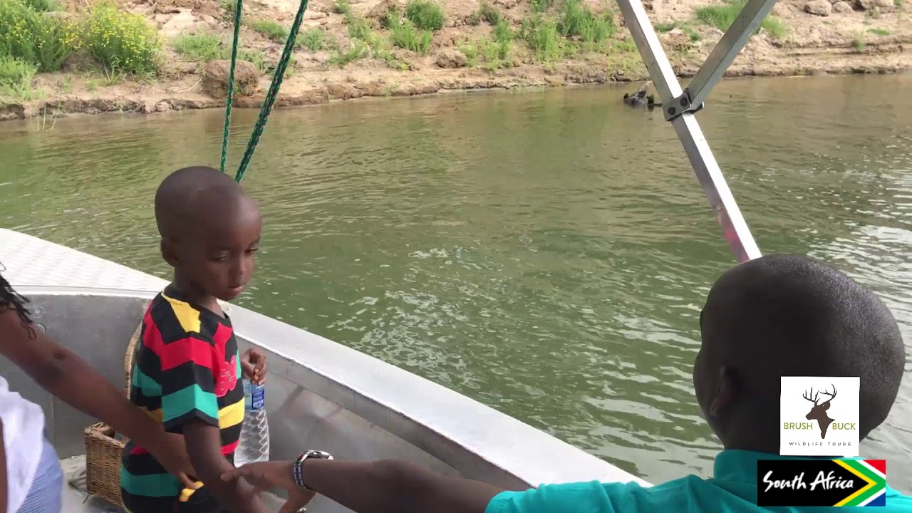 Crocodile on the Zambezi River - YouTube