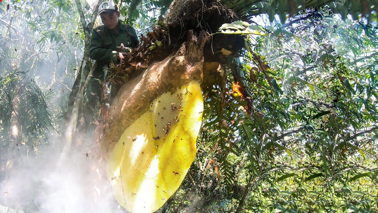 TỔNG KẾT MÙA ONG MẬT 2020 - Forest honey | Thợ Rừng