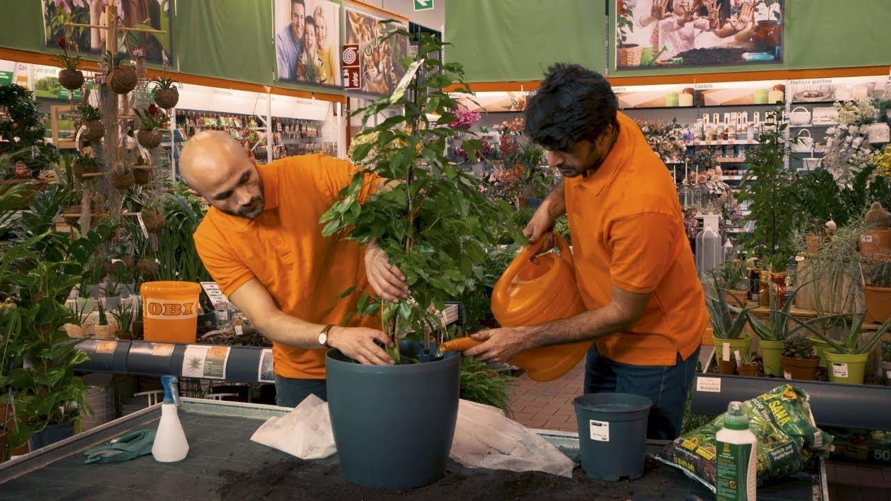 Come prendersi cura delle piante da appartamento obi italia