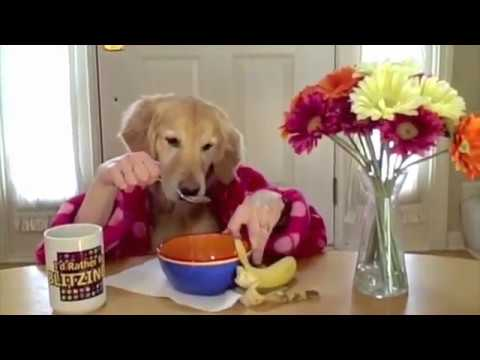 Funny dog eating with hands. 785,114 views
