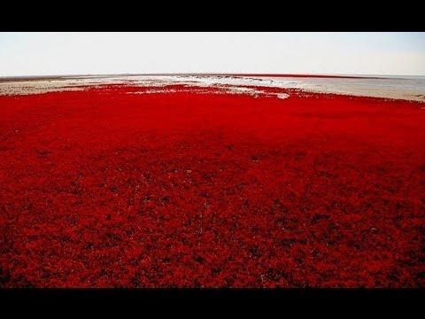 Amazing Red Sea beach in Panjin