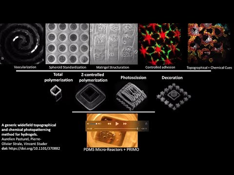 Engineering 3D microenvironments by hydrogel structuration and functionalization with PRIMO