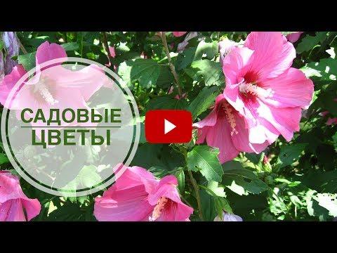 Садовые цветы ➡ Чем украсить сад этим летом? Цветоводство сад огород.
