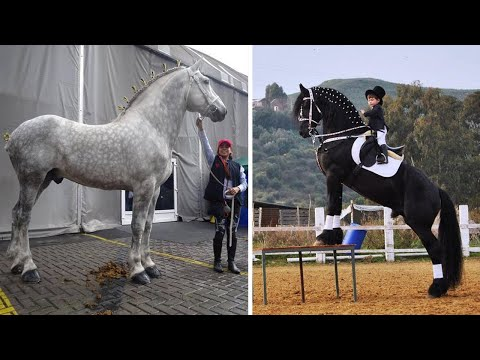 Cute And funny horse Videos Compilation cute moment of the horses - Cutest Horse #40