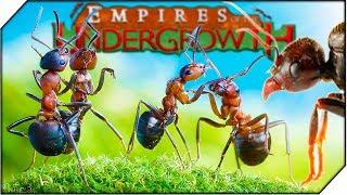 Download БОЕВЫЕ МУРАВЬИ. СОЗДАЙ СВОЮ КОЛОНИЮ МУРАВЬЕВ - Игра Empires of the Undergrowth обзор (1 СЕРИЯ) Mp3 and Videos