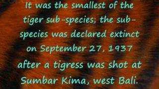 Extinct tiger subspecies