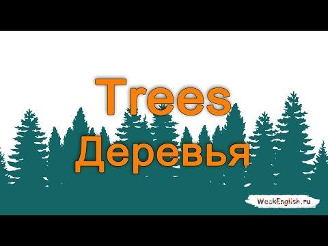 Как будет дерево по английски