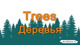 Английские слова - Деревья. Trees