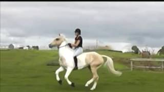 Don't Let Me Down Liberty/free Riding Music Video