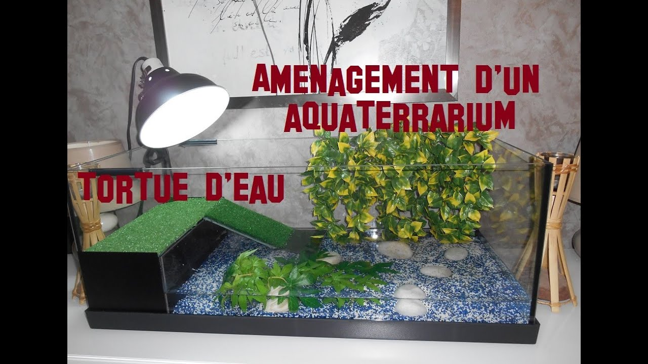 tuto am nagement d 39 un aquaterrarium tortue d 39 eau aquarium turtle breeding water youtube. Black Bedroom Furniture Sets. Home Design Ideas