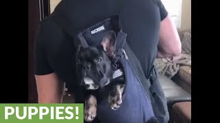 "Puppy in backpack ""dances"" with his owner"