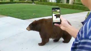 People Try Befriending Bear in Their Neighborhood