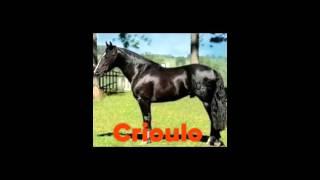TOP 18 raças de cavalo ❤️