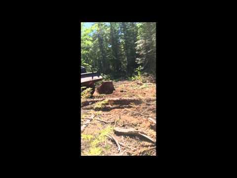 One Big Pine - Morrill Maine