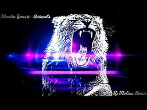 Martin Garrix - Animals (Dj Molina Remix)