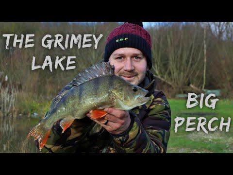 The Grimey Lake, Live Bait Perch Fishing