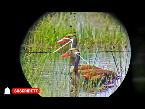 duck hunting air rifle #2