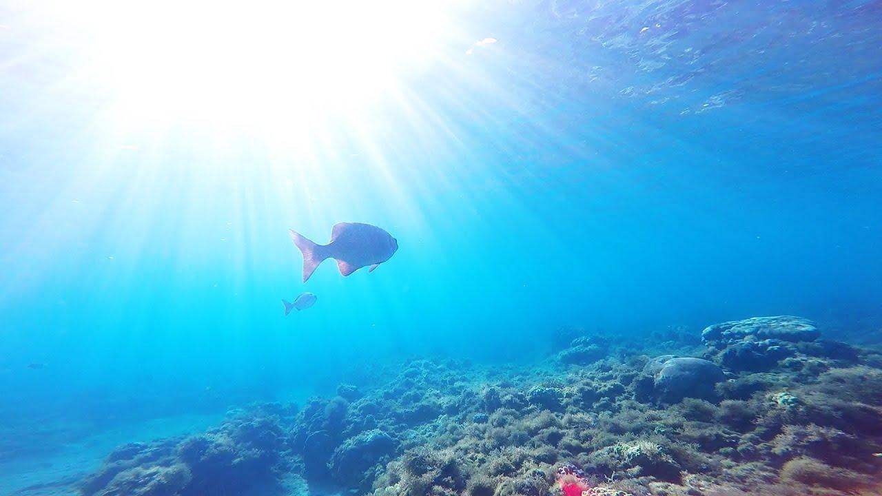 Seven Mile Beach Snorkel Grand Cayman