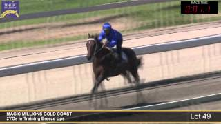Lot 49 - 2YOs in Training Breezeup Thumbnail