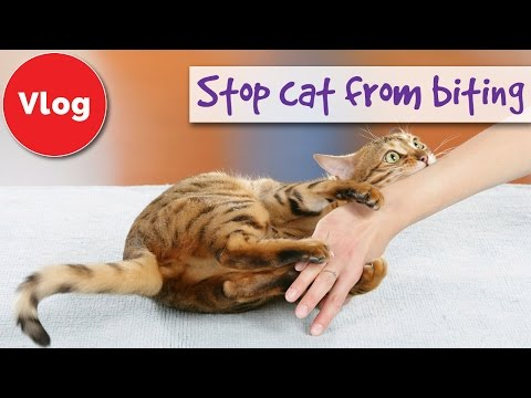 how-to-stop-your-cat-from-biting-you