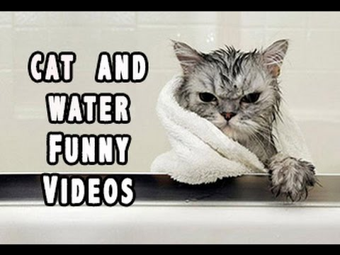 The Best Pranks And Failures: Cat And Water Funny Videos