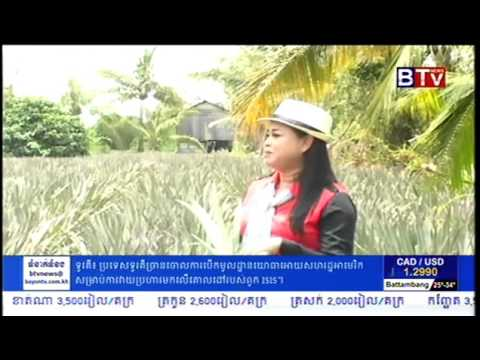Cambodian Agriculture   BTV Agriculture News   Pineapple Farming in Cambodia   YouTube