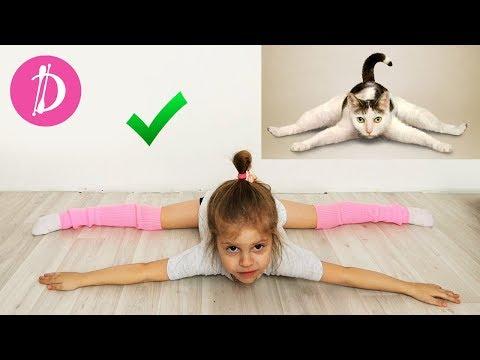 Йога челлендж с животными. Одиночные позы для Дарии. YOGA CHALLENGE The Best Challenges